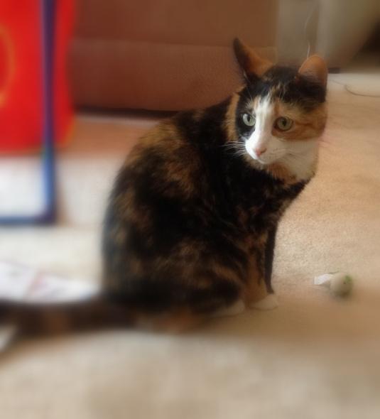 cat3-002